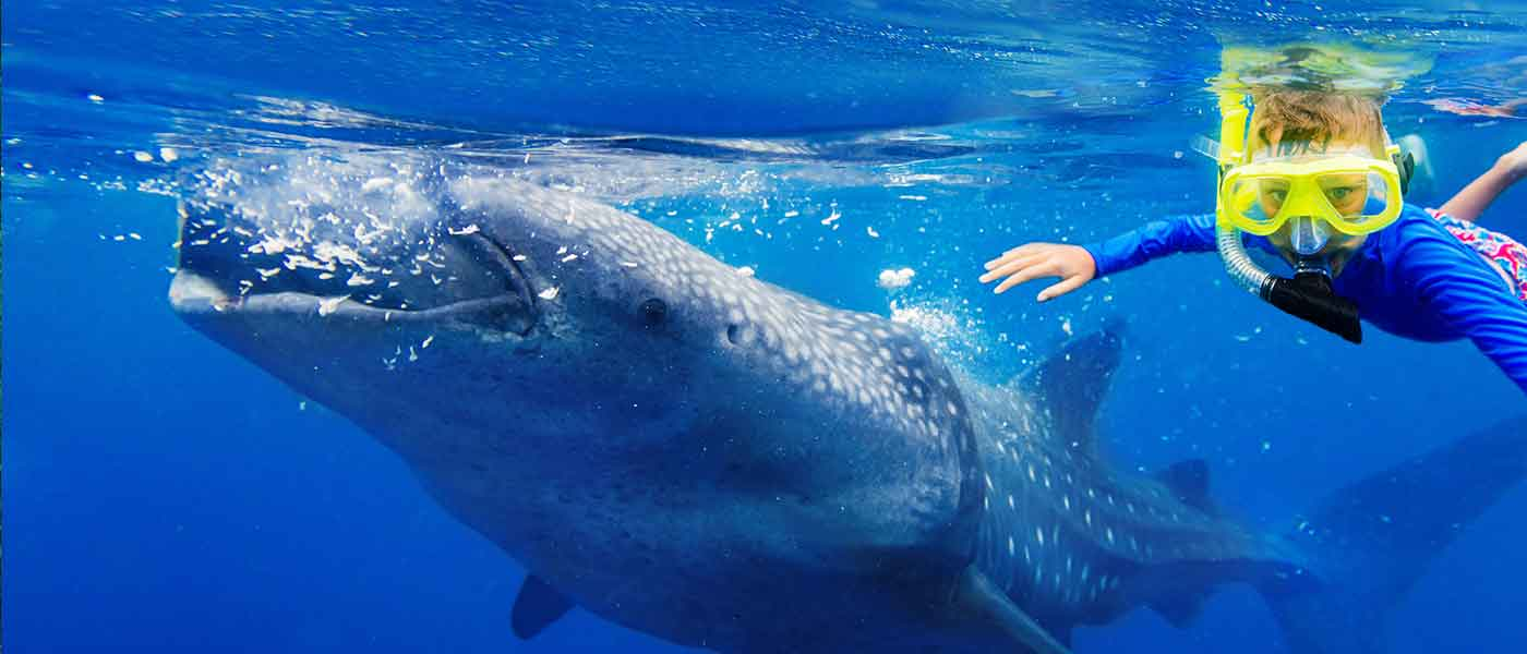 Whale in Oslob philippines