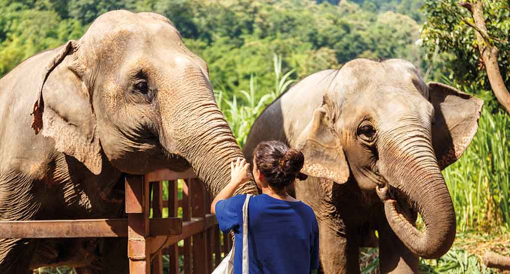 Elephant at sanctuary in Chiang Mai
