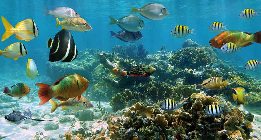 Coral Reefs in Playa del Carmen Mexico