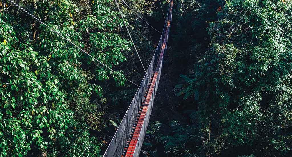 Doitung tree top walk in Chiang Rai