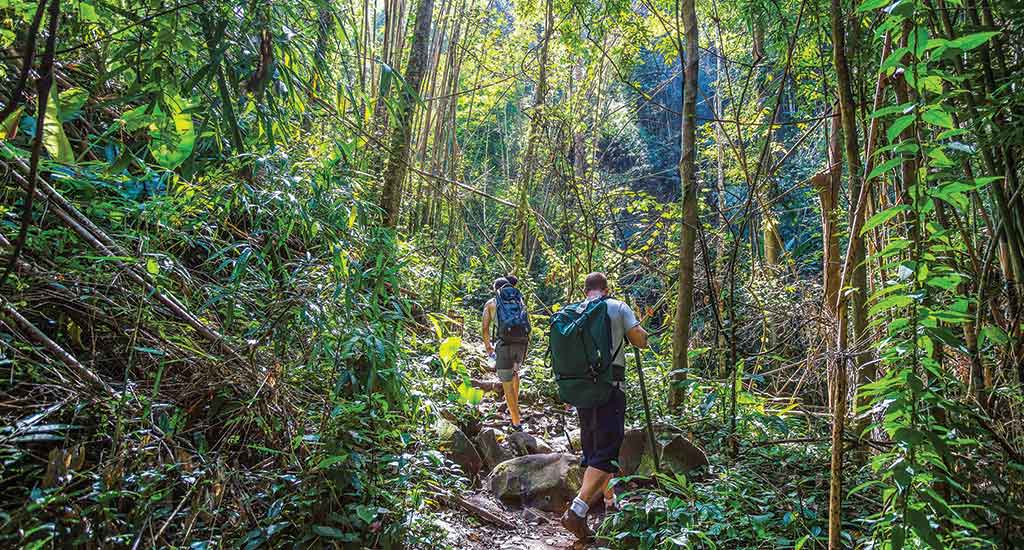 Jungle Hike in Koh Chang