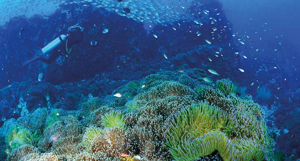 Coral in Gulf of Thailand