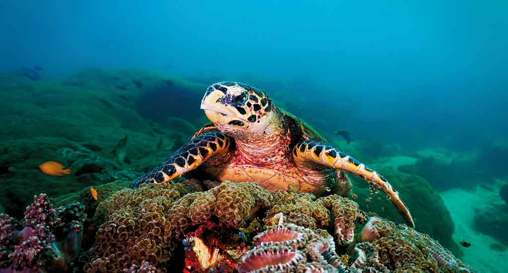 Sea Turtle on Coral Reef from scuba diving at Koh Lipe