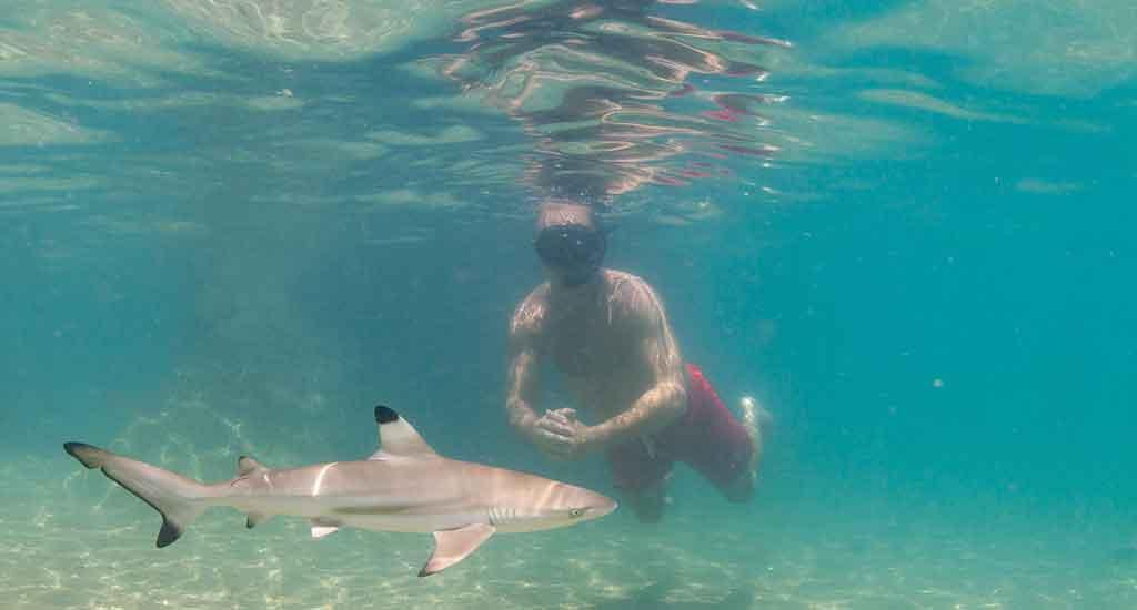 Baby black tip shark at Hin Wong Bay on Koh Tao